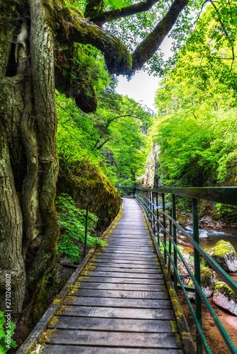 Fototapeta premium Eko ścieżka Struilitsa w zachodnich górskich Rodopy, Bułgaria