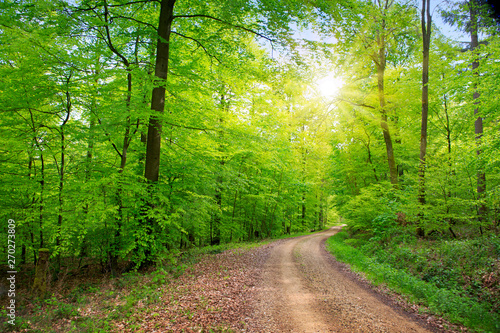 Sunlight in the green spring forest in germany.
