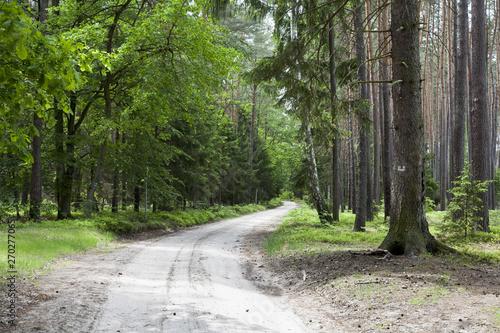 Spoed Foto op Canvas Weg in bos leśna droga w wiosennym słońcu
