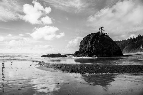 Dramatic black and white seascape with rock formation and gnarled trees reflected in a wet, sandy beach - Short Beach on the Oregon coast