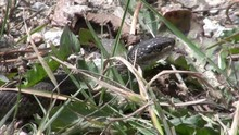 Snake In The Grass, Rocky Mountains