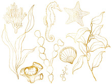 Golden Sketch Underwater Set. Hand Painted Seahorse, Laminaria, Starfish And Shell Isolated On White Background. Aquatic Line Art Illustration For Design, Print Or Background.