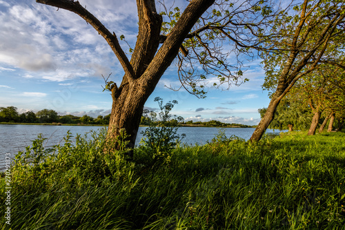 Fotografie, Tablou  Tree on the banks of the river Tejo (Tagus) in Cartaxo, Santarem, Portugal