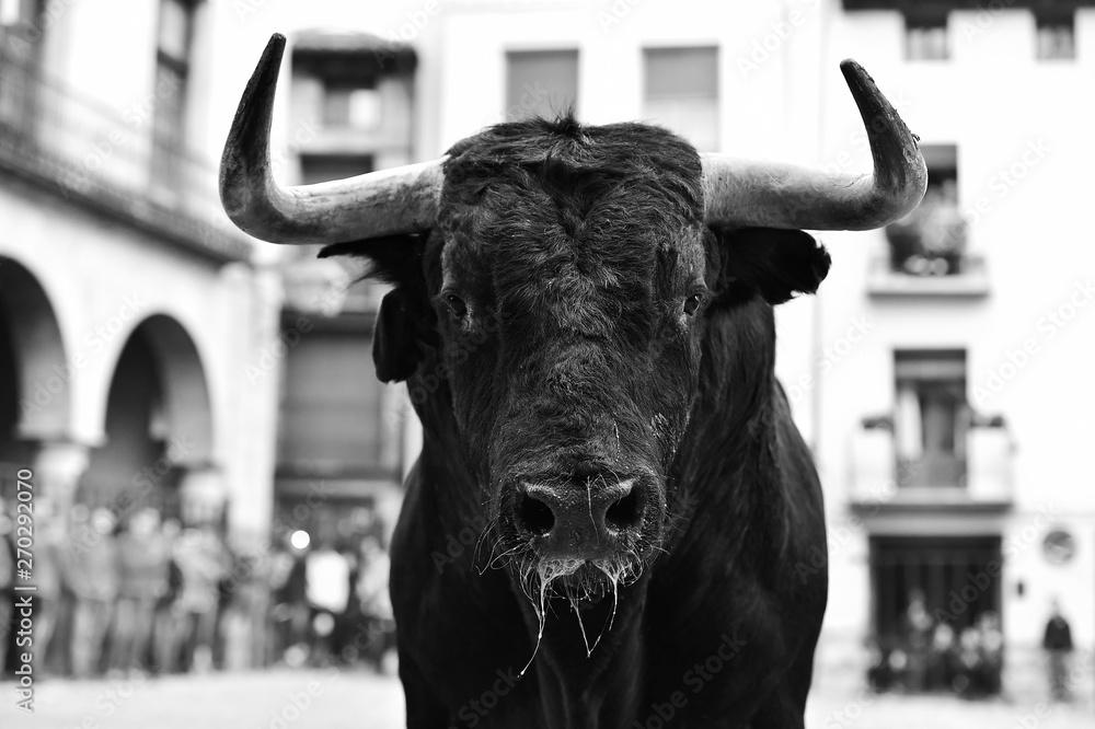 Fototapeta toro español