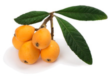 The Loquat With Leaf
