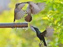 Sunbirds Thrust