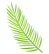 Greenery Branch Of Palm Tree Isolated Icon Vector. Subtropical Decoration, Leaves Botanical Flora Of Exotic Places. Flat Style Creative Herbal Decor