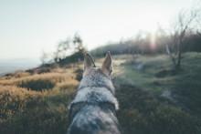 Dog And Sunrise