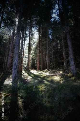 Wall Murals Forest beautiful dark forest with sunbeams