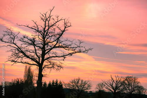 plakat Trees without leaves in the field against the sunset sky