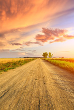Rural Dirt Road And Yellow Whe...
