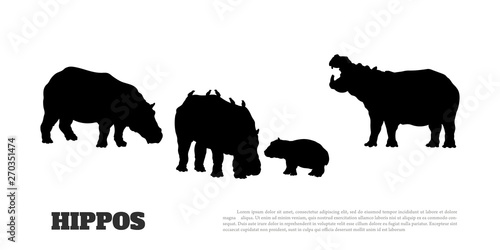 Black silhouette of hippopotamus family on white background. Isolated scene with hippos. Landscape of wild african animals