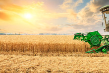 Combine Harvester Harvesting Y...
