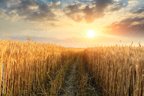 Garden Poster Culture Field road and yellow wheat fields at sunset