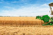 canvas print picture - Combine harvester harvesting wheat on sunny summer day