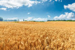 Leinwandbild Motiv Yellow wheat field and blue sky