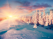 Unbelievable Winter Sunset In Carpathian Mountains With Snow Covered Fir Trees. Colorful Outdoor Scene, Happy New Year Celebration Concept. Artistic Style Post Processed Photo