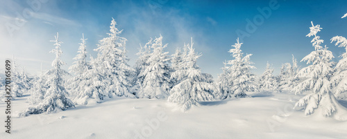 Fabulous winter panorama of mountain forest with snow covered fir trees. Colorful outdoor scene, Happy New Year celebration concept. Beauty of nature concept background.