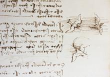 Bird, Dove, Mechanism Of Fligh...