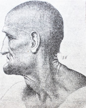 The Head Of The Old Man By  Leonardo Da Vinci In The Vintage Book Leonardo Da Vinci By M. Sumtsov, Kharkov, 1900