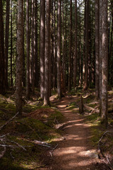 A beautiful woodland walk in dappled forest in the Olympic National Park, Washington State, USA, nobody in the image