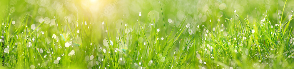 Fototapeta Green grass abstract blurred background. beautiful juicy young grass  in sunlight rays. green leaf macro. Bright fresh Summer or spring nature background. Panoramic banner. copy space