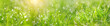 Green grass abstract blurred background. beautiful juicy young grass  in sunlight rays. green leaf macro. Bright fresh Summer or spring nature background. Panoramic banner. copy space