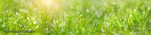 Poster Gras Green grass abstract blurred background. beautiful juicy young grass in sunlight rays. green leaf macro. Bright fresh Summer or spring nature background. Panoramic banner. copy space