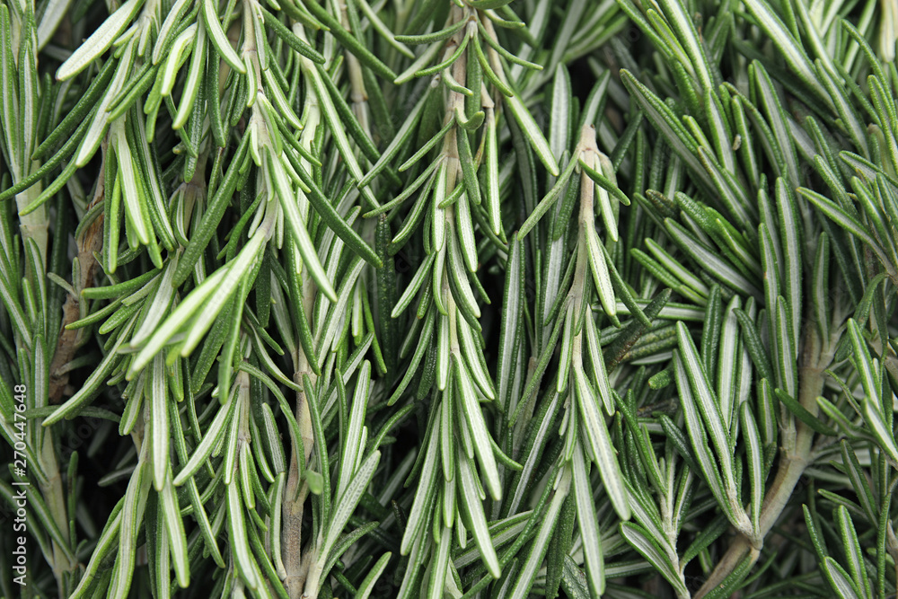 Fototapety, obrazy: Fresh rosemary twigs as background, top view. Aromatic herb