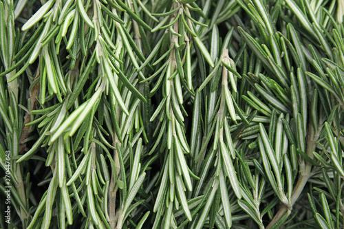 Fresh rosemary twigs as background, top view. Aromatic herb Tapéta, Fotótapéta