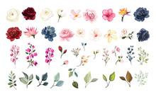 Set Of Floral Elements. Flower...