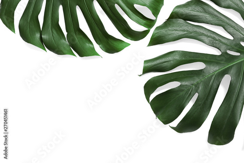 Obraz na plátne Green fresh monstera leaves on white background, top view