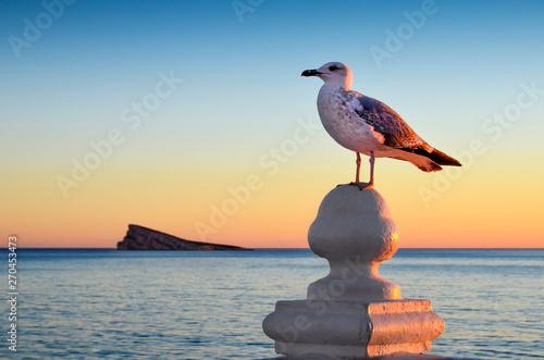 Photo  Mirador del Balcón del Mediterráneo en Benidorm con gaviota