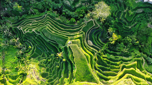 Top view or aerial rice terraces