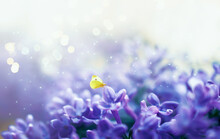 Fantasy Lilacs Flowers Close-u...