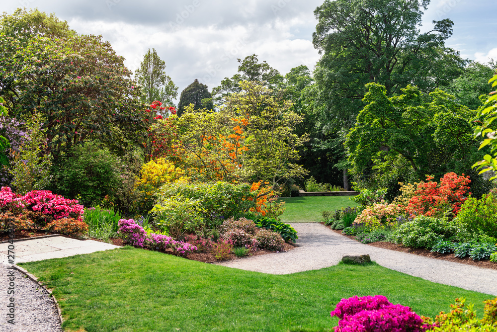 Fototapety, obrazy: Beautiful Garden with blooming trees during spring time, Wales, UK