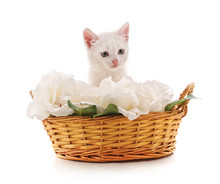 White Kitten In A Basket With ...