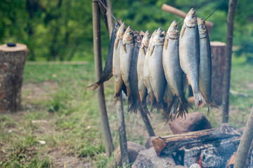 Cooking fish near the fire and in the smoke. The ancient way of cooking fish kurshey and Vikings.
