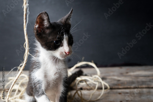 Fotografía  Adorable kitten playing with natural worsted
