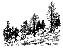 Young Forest . Trees On The Rock . Vector Freehand Drawing . Engraving.