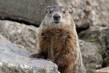 Groundhog Is Watching You