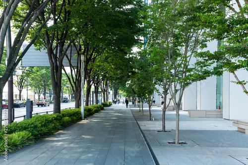 (神奈川県ー都市風景)初夏の横浜みなとみらい街路樹1