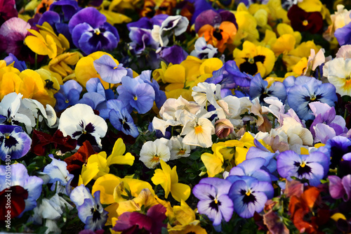 Fényképezés  flowers on a white background, photo as a background