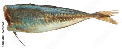 Fotografija  Atlantic horse mackerel