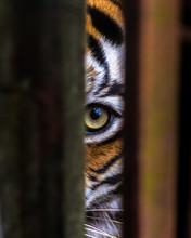 Eye Through Captivity