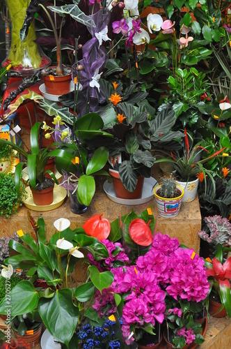 Fototapeta Kwiaciarnia obraz