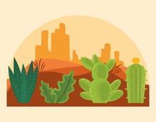 Cactus In Desertscape Scenery