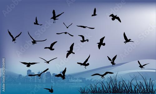 Foto op Canvas Draw dark seagulls above blue water