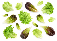 Fresh Lettuce Leaves Isolated On White Background. Pattern With Salad Leaves.