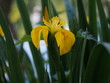 Leinwandbild Motiv Reed in Flower